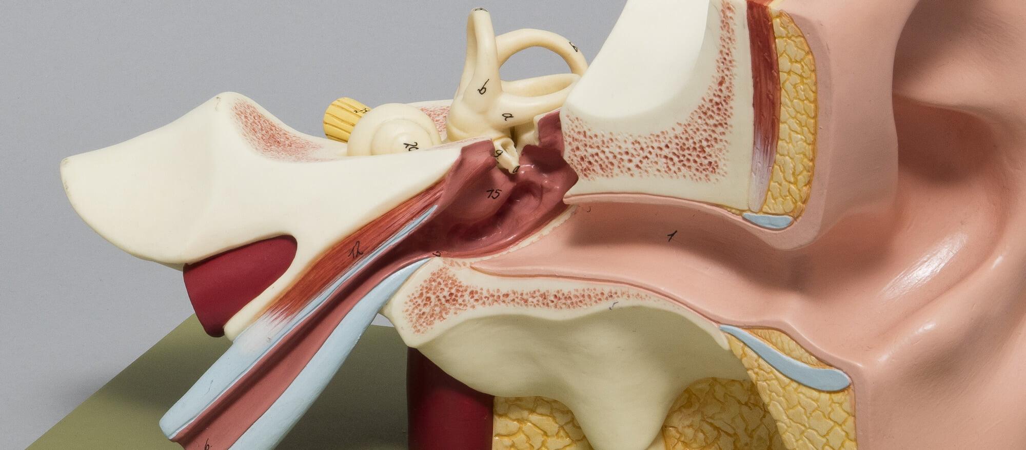 Auris Ear Care | Inner Ear | Ear Cleaning London